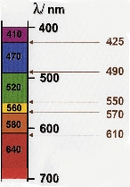 Image1.jpg (27912 octets)